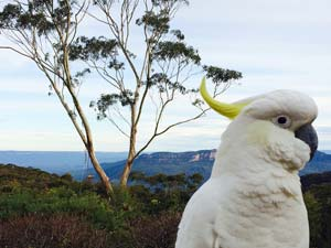 Cockatoo on the deck